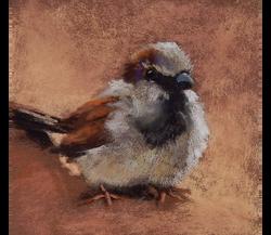 Sparrow on Terracotta