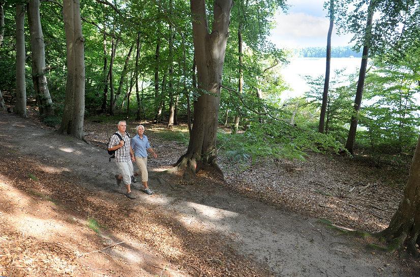 Wandern an der Elbe