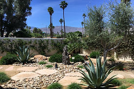 Olive tree, palm trees, desert plants and pathways in church courtyard