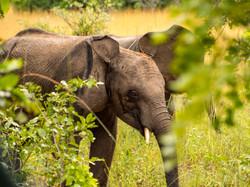 GRI elephant orphan rescue