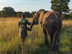 GRI elephant orphanage