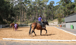 Coaches working towards keeping horses schooled