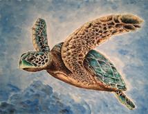 Sea Turtle 1