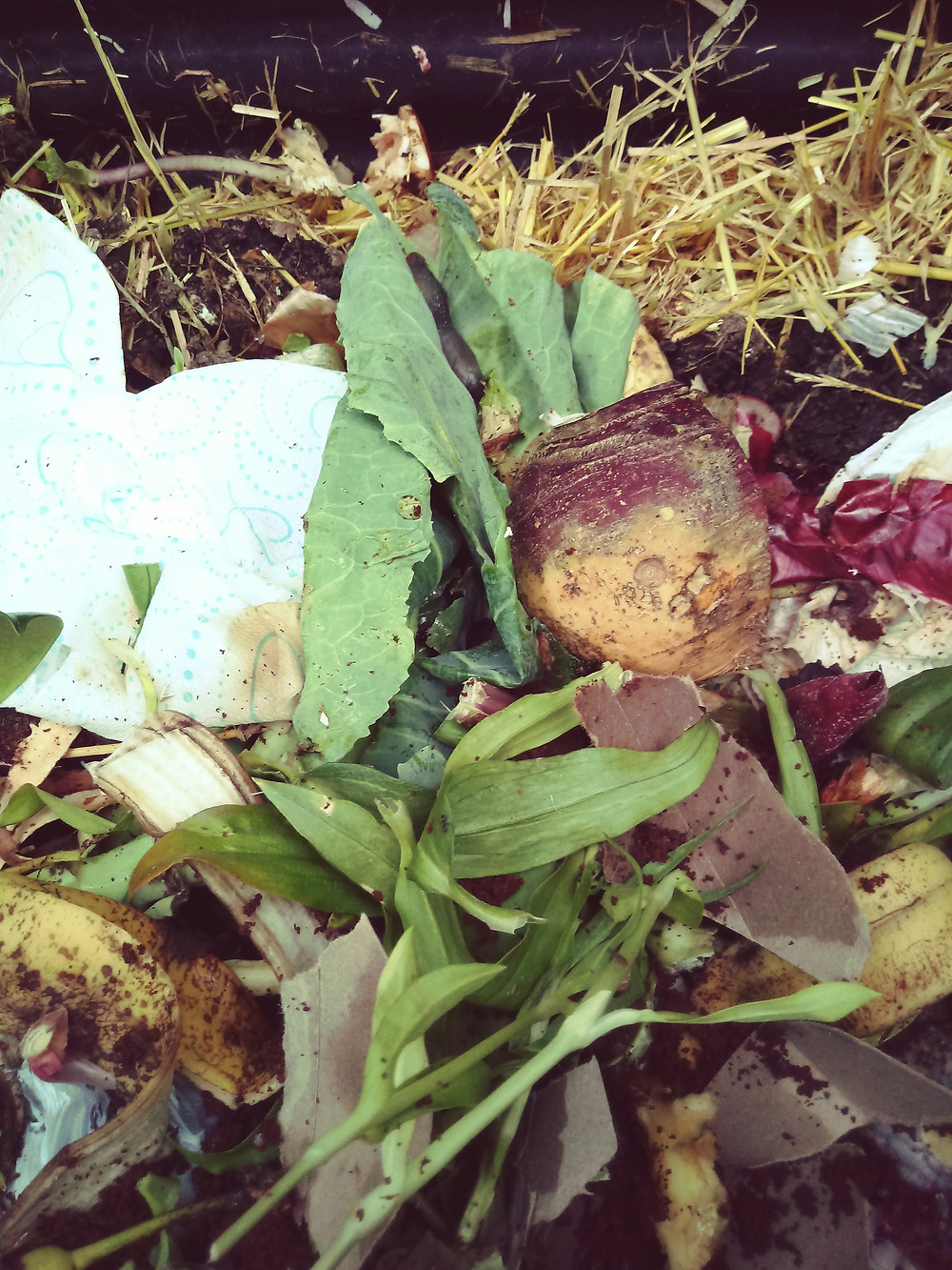 Fresh materials in a compost bin with a slug feeding on a lettuce leaf