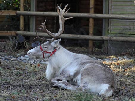 Christmas secrets revealed at Wildwood Trust