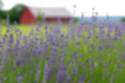 Lavenlair+Farm+-Home+Banner.jpg
