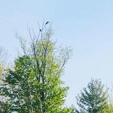 birdwalk8.jpg