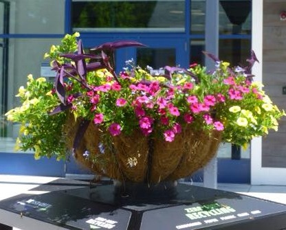 Planters at the Library