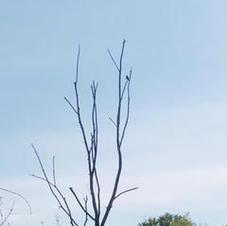 birdwalk4.jpg