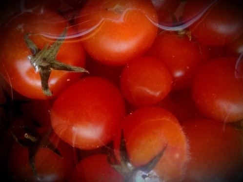 Tomate Cherry envasado