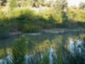 Mit Regenwasser gefüllter Teich in Portgal. Lebensraum für Pflanzen und Tiere.