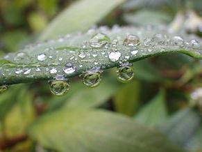 Wassertropfen an Blatt. Speigelbild in Wassertropfen