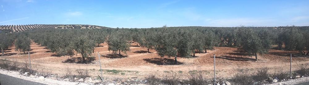 Die Pflanzen unter und zwischen den Kulturpflanzen zu vergiften oder unter zu pflügen gehört zu den verherendsten Praktiken unserer Zeit. Der Boden erhitzt sich, das Wasser verdunstet und die Bäume sind den ganzen Tag der prallen Sonne ausgesetzt.