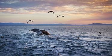 Monterey bay.jpg