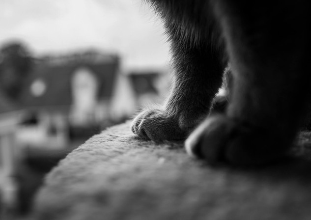 Animaux - Cyril Cornet Photographe