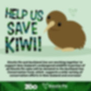 Kiwi-Intro.jpg