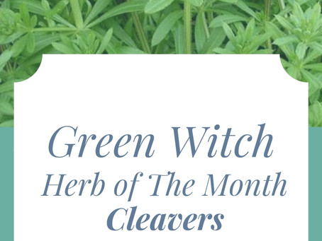 Herb of the Month: Cleavers