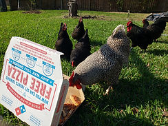 Carl the Chicken Eating Pizza with Frien