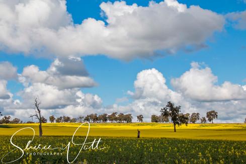 Rural Life 6.jpg