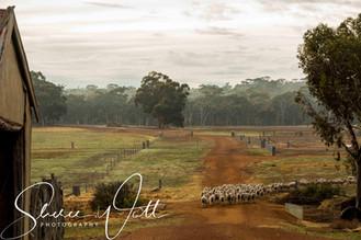 Rural Life 4.jpg