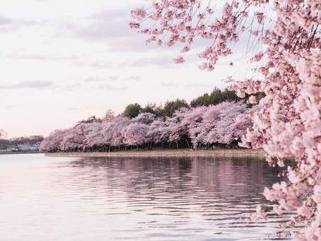 2021 Top 6 Ideas for Activities in Spring While Avoiding Crowds in Korea