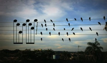 Partition oiseaux.jpg
