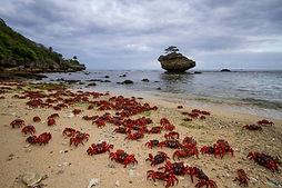 Crabs beach.jpg
