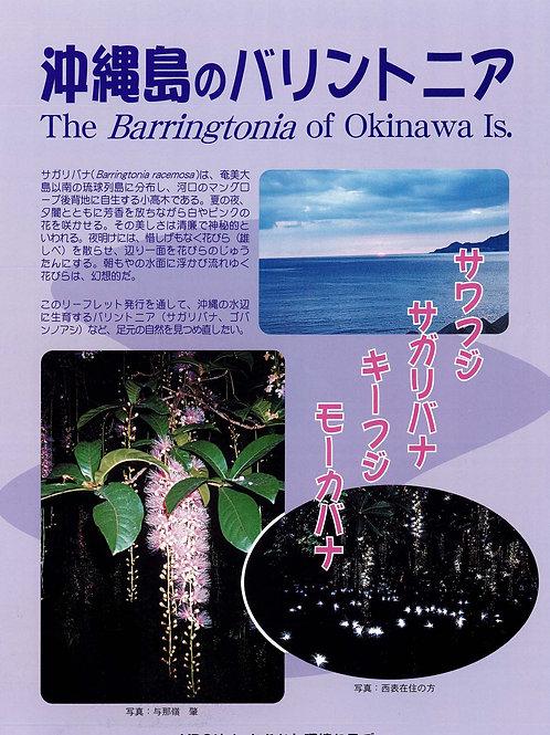 沖縄島のバリントニア(日本語版)