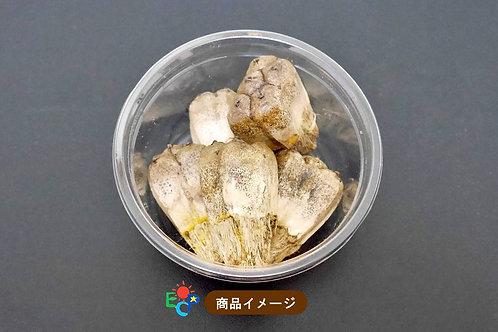 【Island Crystal】南国便り:アダン