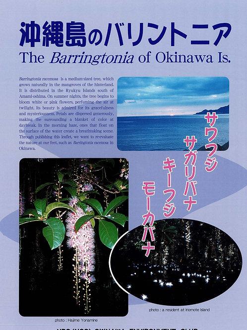 沖縄島のバリントニア(英語版)