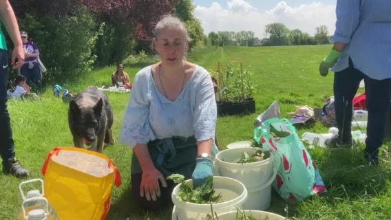 Nettles - a great natural plant tea fertiliser