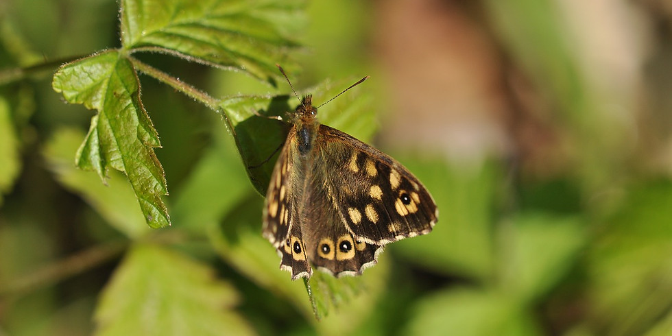 NO BOOKING NECESSARY! Biodiversity Measuring Session - Northwick Park Community Garden Area - Saturday 4th May