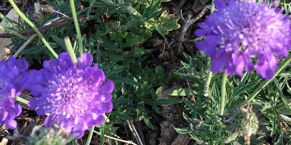 Free online workshop - Plants that grow in the community garden