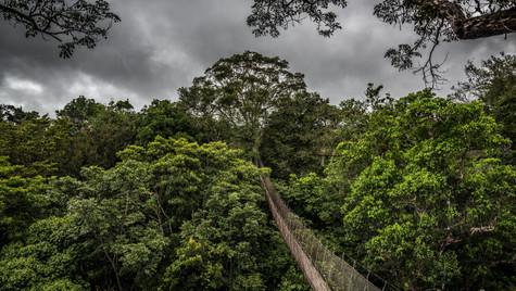 Amazon Bridge