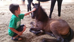 Learn horsemanship at a young age