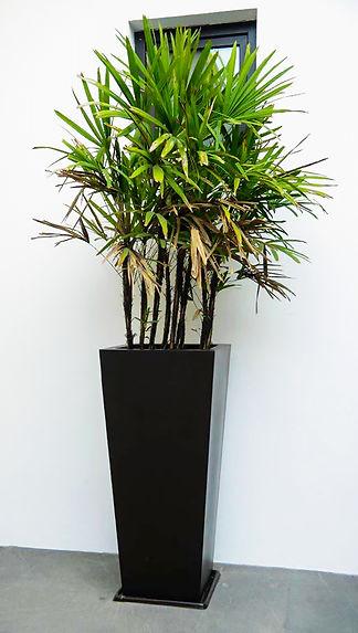 Macetas modelo Cónico Liso color negro mate