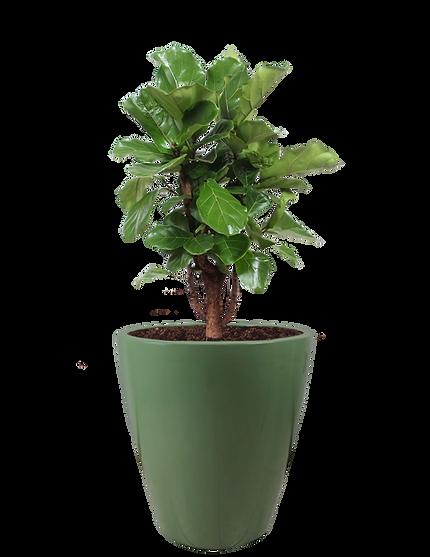 Maceta modelo Brasil color olivo