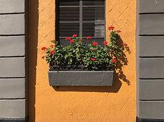 黄色い壁と花