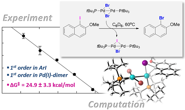 """<p class=""""font_8""""><strong>Kinetic and Computational Studies on Pd(I) Dimer-Mediated Halogen Exchange of Aryl Iodides&nbsp;</strong></p>"""