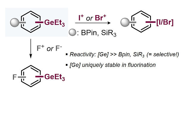 """<p class=""""font_8""""><strong>Orthogonal Stability &amp; Reactivity of Aryl Germanes Enables Rapid and Selective (Multi)Halogenations</strong></p>"""