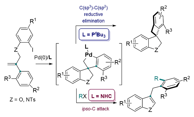"""<p class=""""font_8""""><strong>Remote C−H alkylation and C-C bond cleavage enabled by an in situ generated palladacycle</strong></p>"""