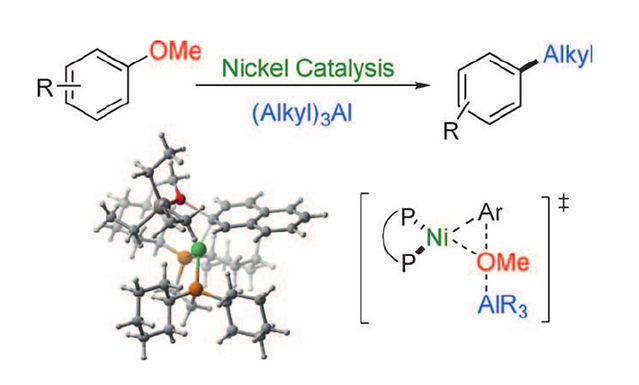 """<p class=""""font_8""""><strong>Lewis Acid Assisted Nickel-Catalyzed Cross-Coupling of Aryl Methyl Ethers by C-O Bond-Cleaving Alkylation: Prevention of Undesired β-Hydride Elimination</strong></p>"""
