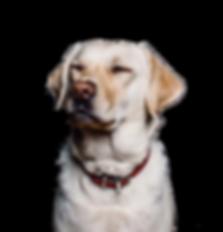 animal-collar-dog-8700 copy.png
