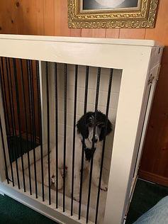 Custom Kennel Crate