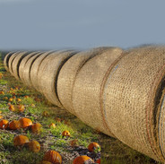 pumpkinbales.jpg