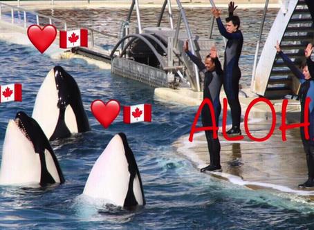 Yes Canada! XOXO Marine Life