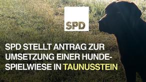 SPD-Antrag: Hundespielwiese in Taunusstein