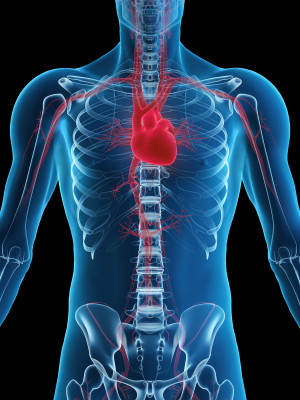 Chiropractic and Your Heart