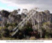 Eucalyptus and Beech S ISL NZ smw.jpg