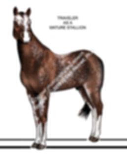 Traveler mature horse AFTER smw.jpg